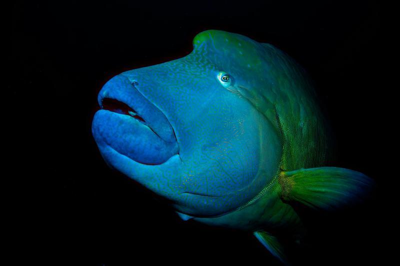 The great Neapolitan Fish