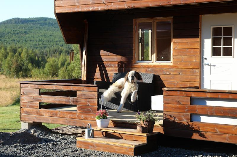 Ty Punch our St Bernard on the terrace of the chalet