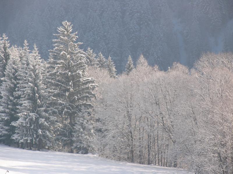 vista dalla casa, in inverno