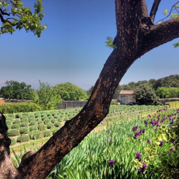 Our private biological farms surrounding the village will provide you daily with fruits & vegetables