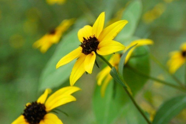 Wildflowers of the Smoky Mountains