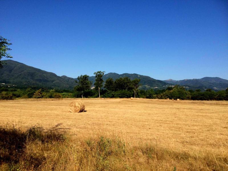 Campos de cereales alrededor de villa