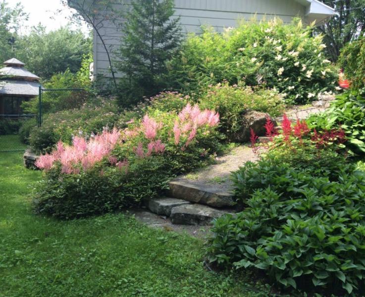 Jardin en été.