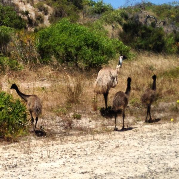 Mum and babies strolling along Lancelin road on the way in to town