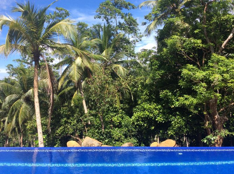 Jungle edge infinity side of 30 metre pool