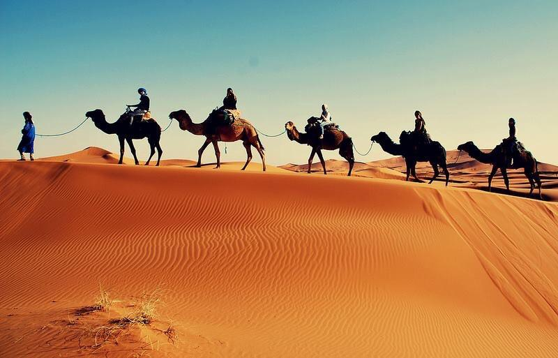 Camels by the sand dunes of Merzouga excursions!