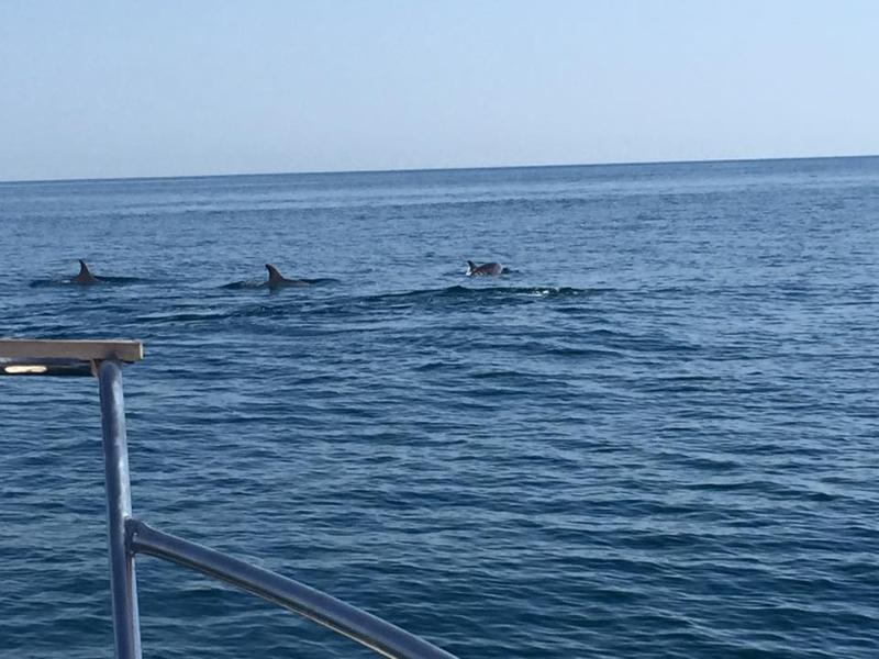 Dolphin Safari in neighbour town 6 minutes by train.