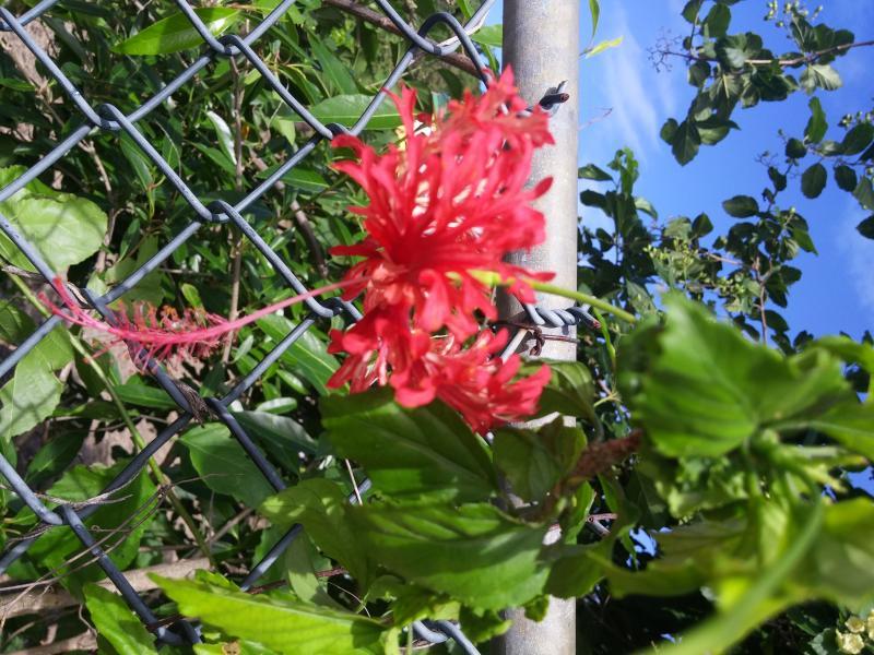 bloem gember in de Tuin