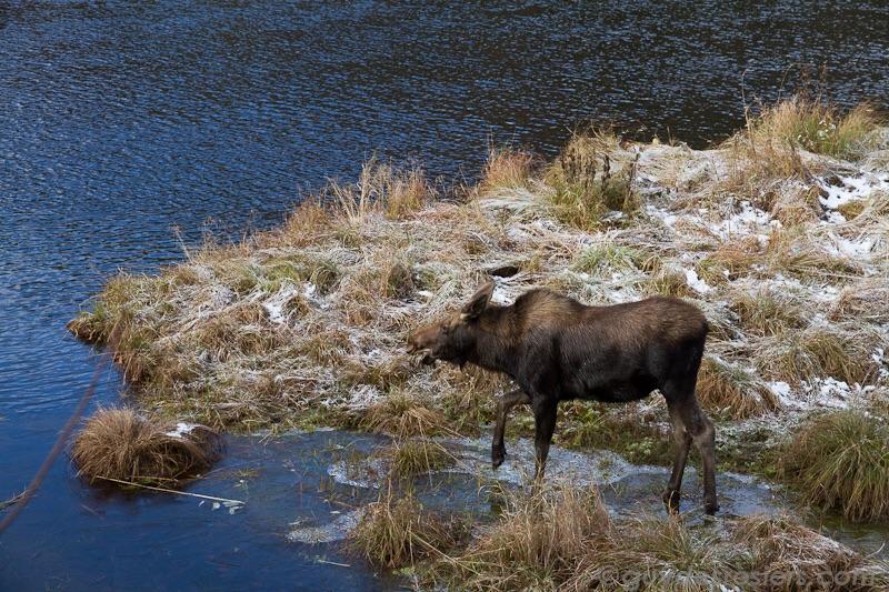 Animaux que vous pouvez observer dans le Parc National.