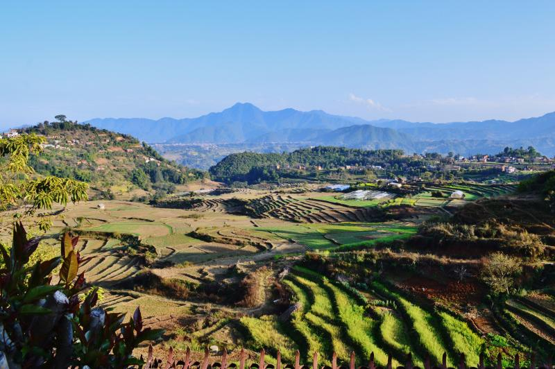 View over the ricefields