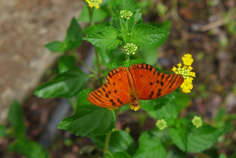 un papillon, tout simplement