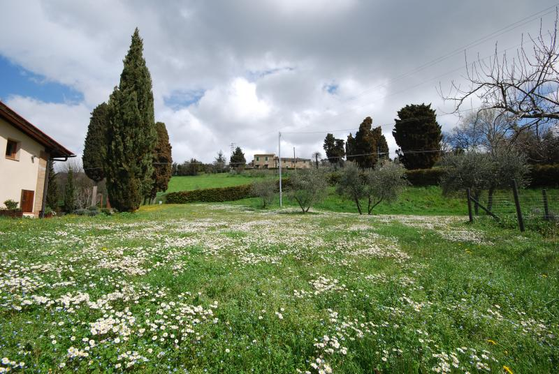 Meadow in the property
