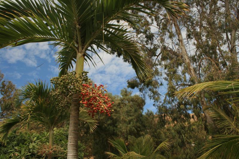 Palmera botella fith fruit