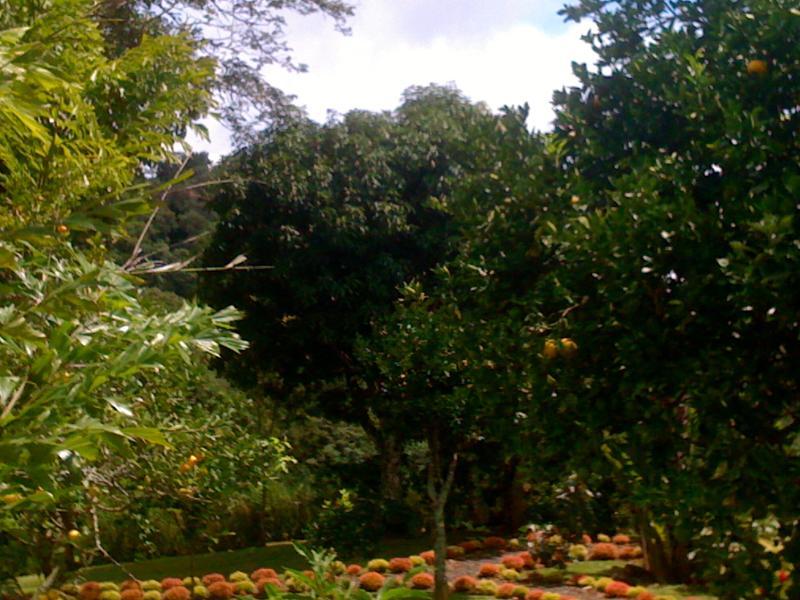 .. .all variedades de árboles frutales tropicales