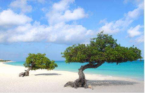 Divi Trees Aruba is famous for in Eagle Beach