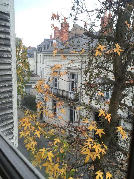 Autumnal view from lounge window