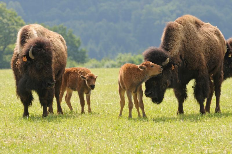 Ranch des Bisons _ Besoin de vous évadez !, holiday rental in Zweibruecken