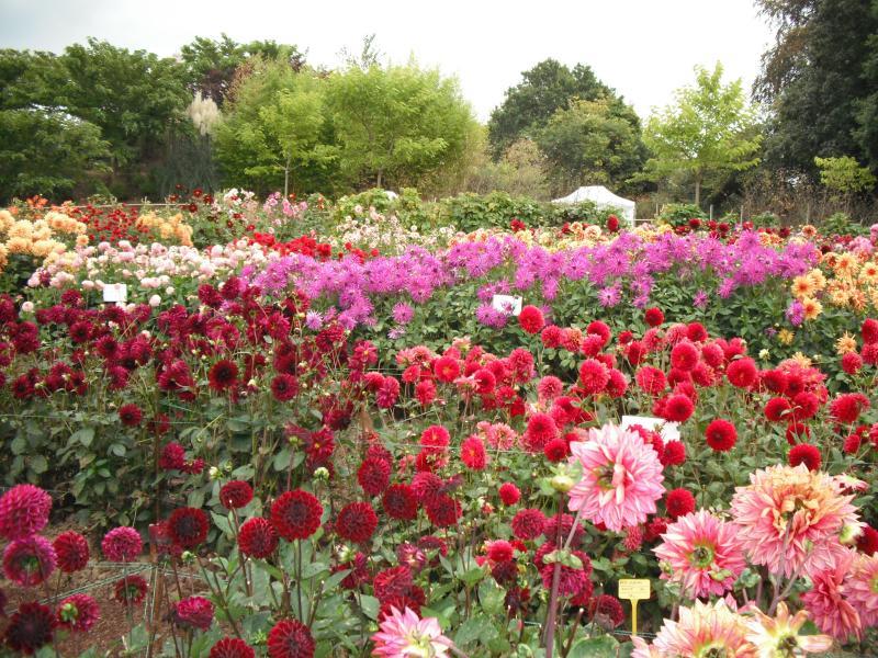 Visit the Festival du Dahlia in September-a blaze of colour!