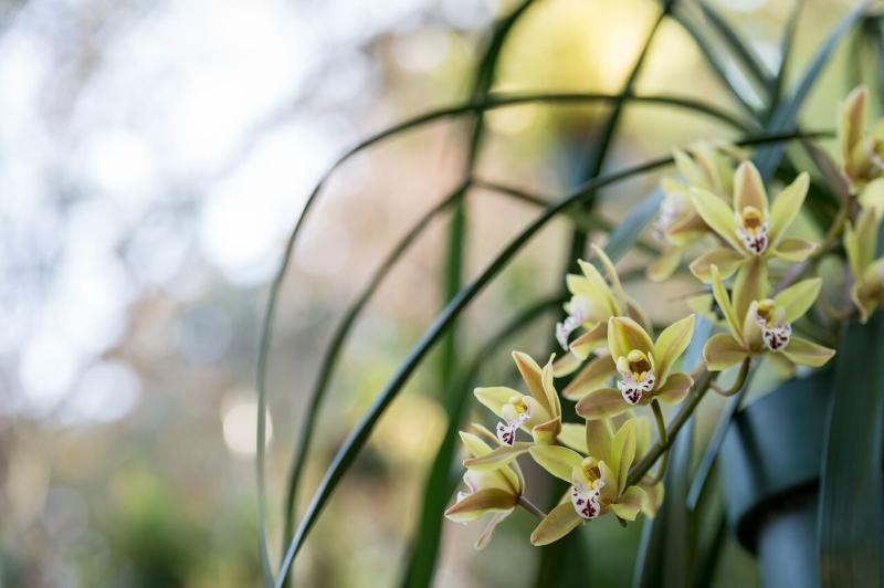 Une orchidée en pleine floraison près de la chambre Blue Grass