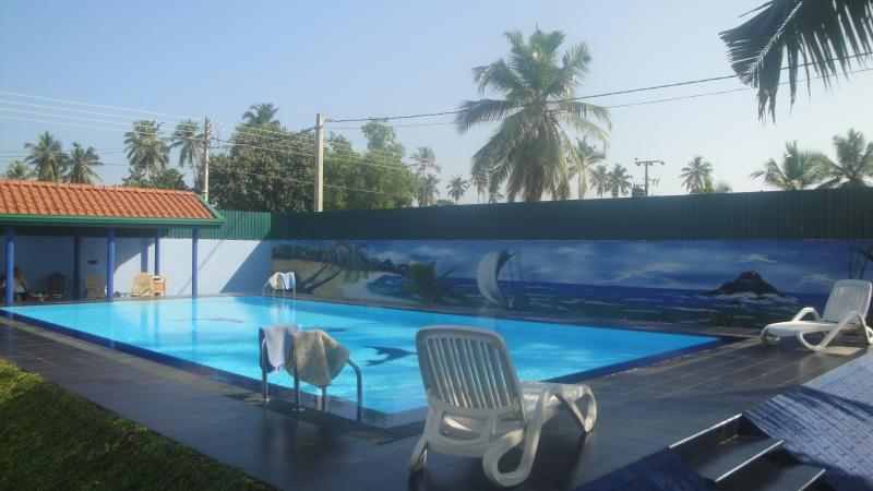 Pool from Coconut tree view.