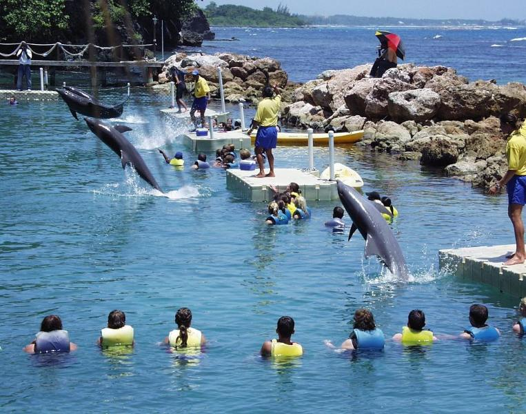 Swimming with Dolphins at Dolphin Cove – 10 minutes' drive towards Ocho Rios