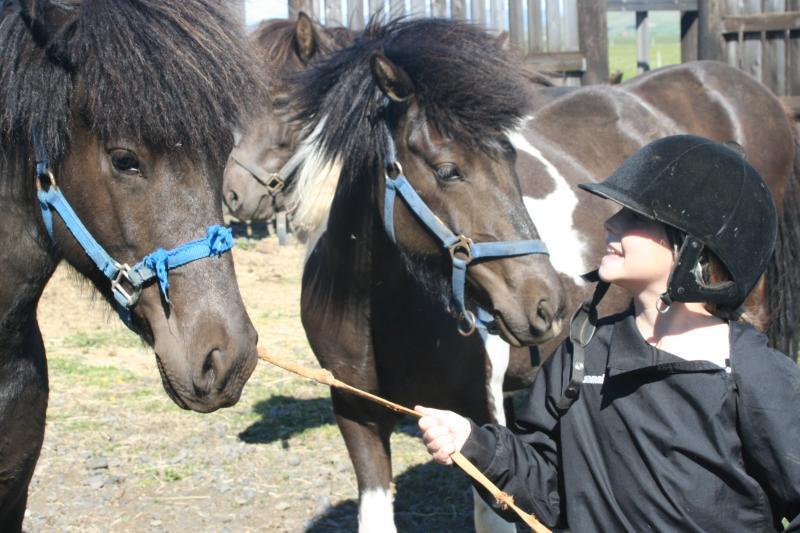 Rebekka mit unseren Pferden. Die Schwestern Hekla und Slaufa.