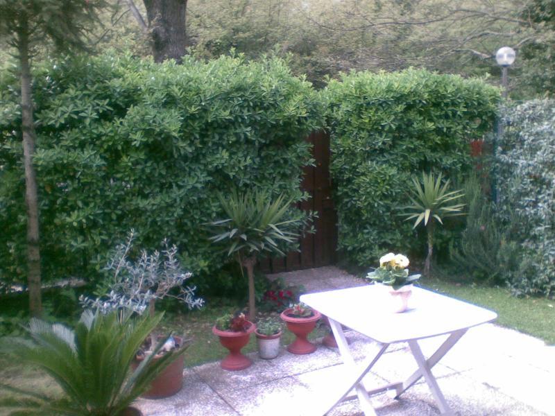 The Garden facing the Oak forest