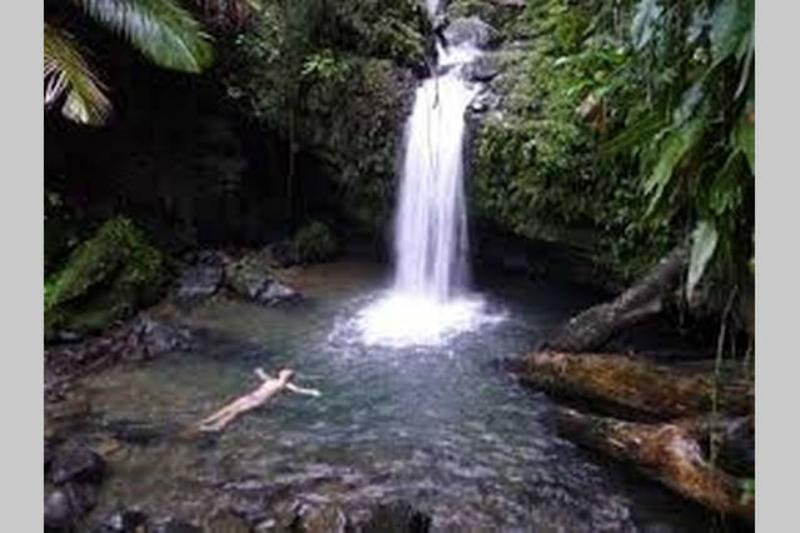 Relax in the cool waters of the rainforest.