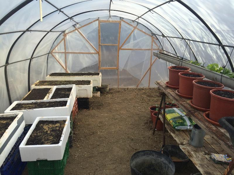 Green house with herbs and vegetables, all self service and included in the price