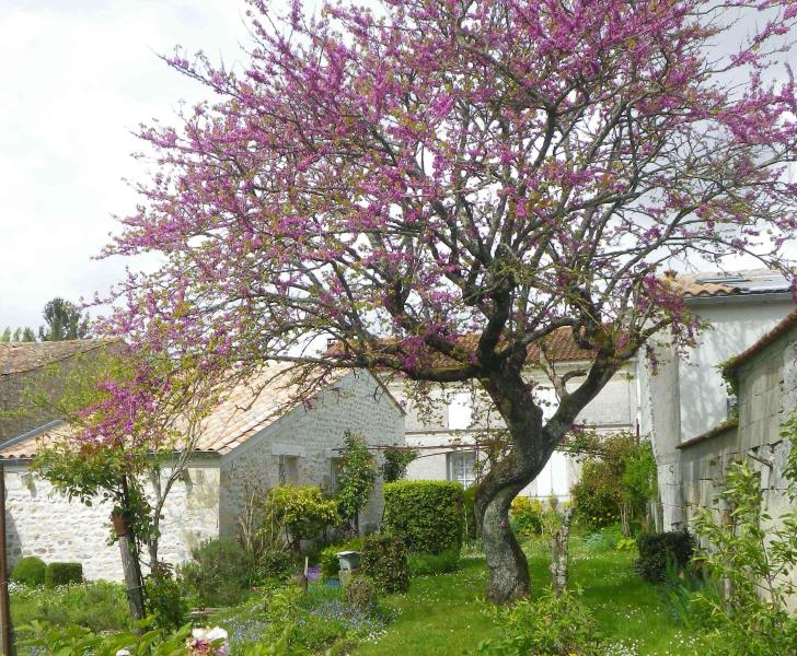 Gîte du jardin, holiday rental in Saint Romain sur Gironde
