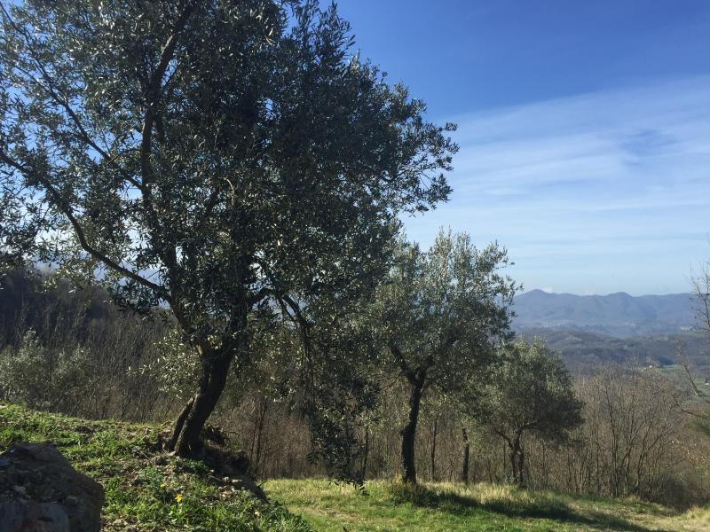 Dar un paseo por el olivar privado