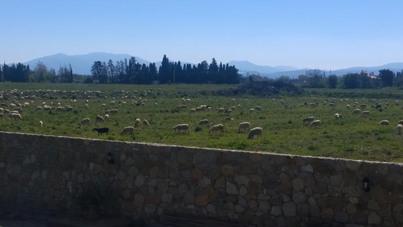 Mas Granata - 700 m du centre de Perpignan, location de vacances à Baho