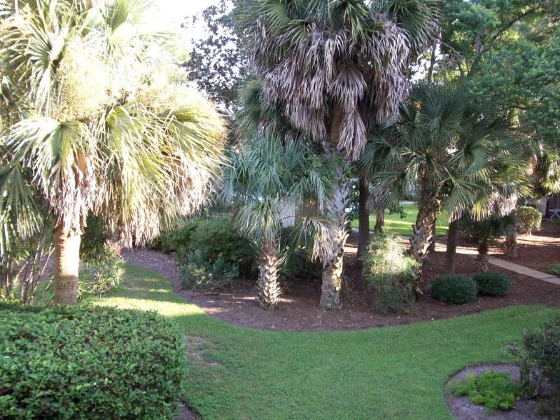 Beautiful Courtyard