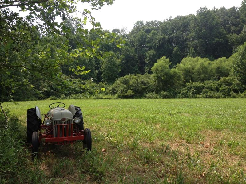 One of the lower fields.  Bordered by Green Creek