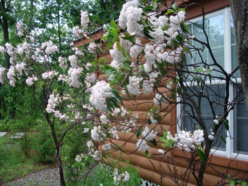 Cabin outdoor in Spring