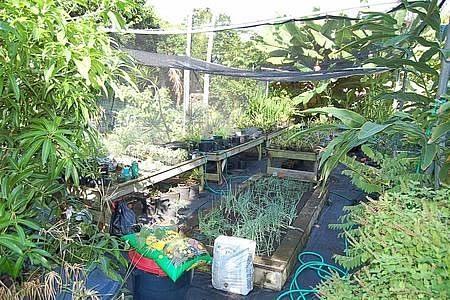 We grow vegetables, herbs, orchids, bananas, papayas