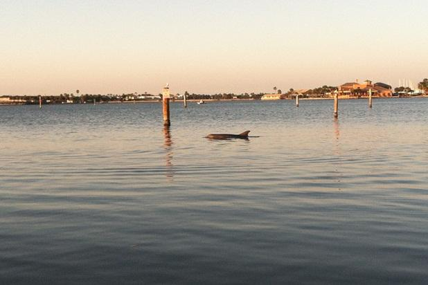 Rarely a day goes by that a dolphin doesn't pass by the front of the house