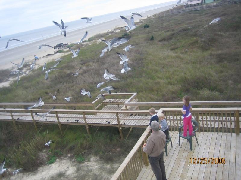 feeding seagulls off the deck