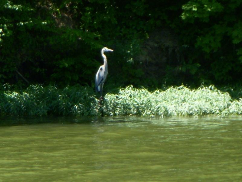 Rocky Fork Lake.... 'Immerse Yourself In Nature!'
