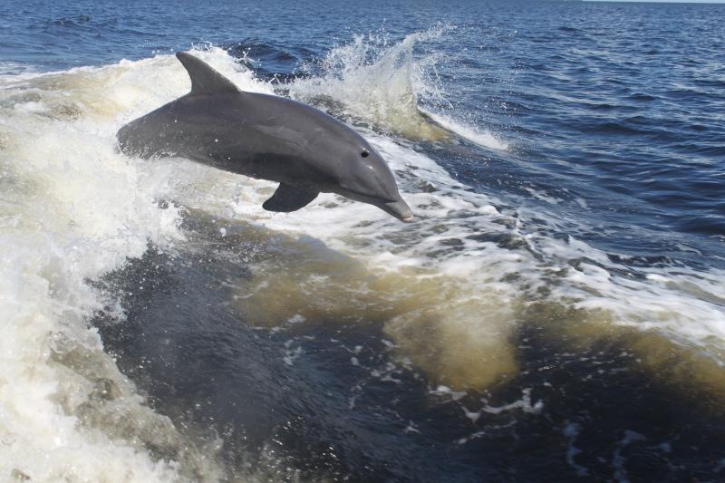 This one kept following our boat!!