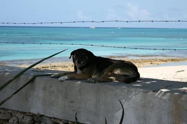 Friendly island dogs stop by for a visit!