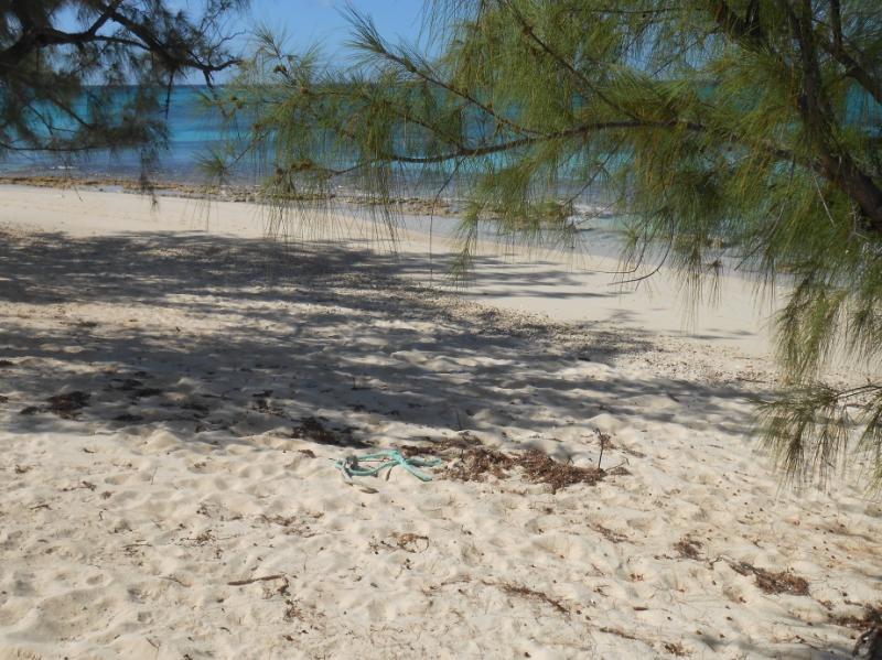 View south down the beach.
