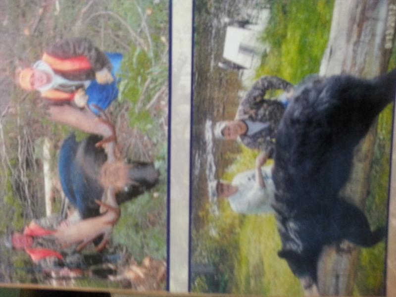 Moose and bear photo