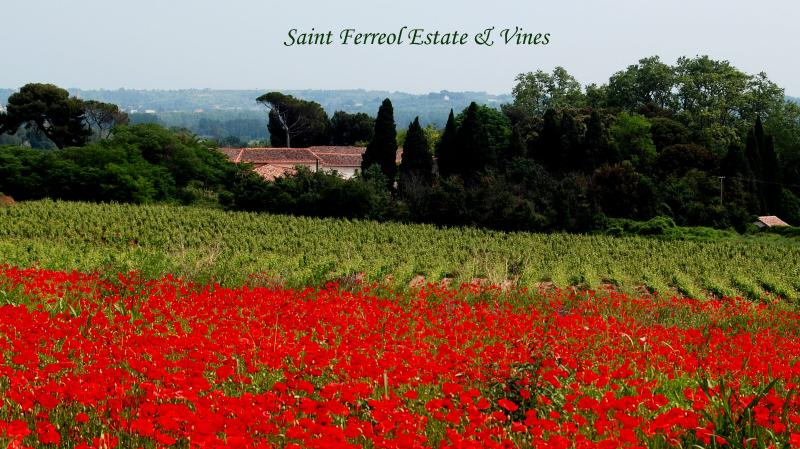 Saint Ferreol Estate and Vines