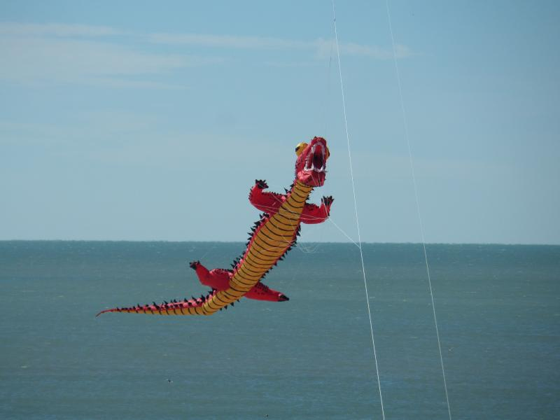 Did you ever see before a flying ALLIGATOR? I took this photo from our balcony in December 2015.