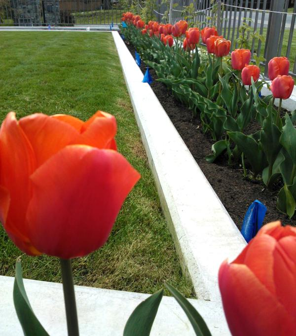 Book in April for the tulips in our garden and the world famous cherry blossoms all over town.