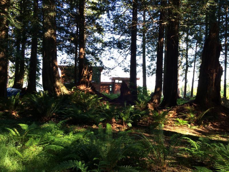 Ve mirando hacia la casa de maderas