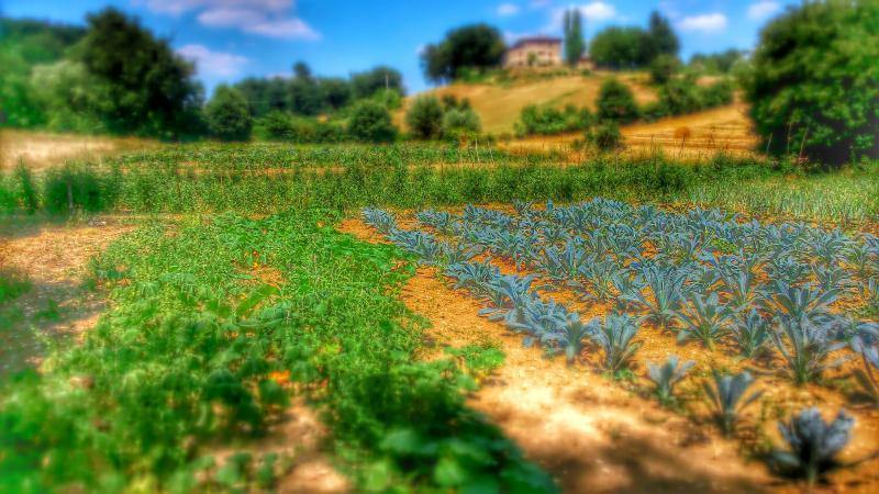 natural garden fattoriapoggiodidante