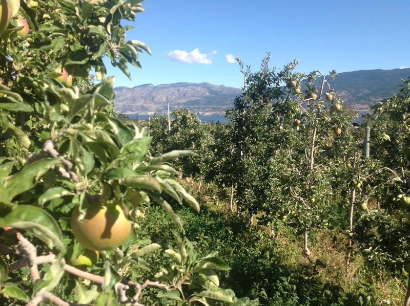 Fall also brings our apples destined for cities around the world.