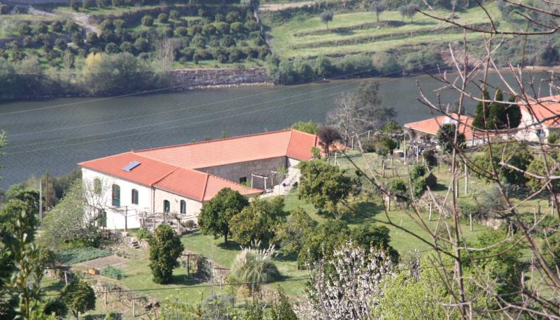 Vineyard in the Douro valley, location de vacances à Castelo de Paiva